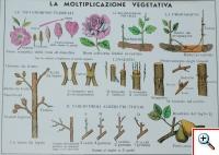 La Moltiplicazione vegetativa